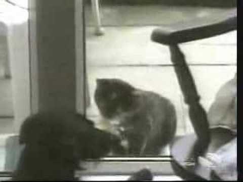 Ну самые смешные коты!
