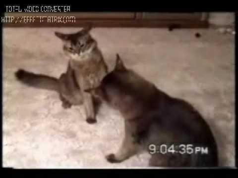 смешное видео про кошек .mp4
