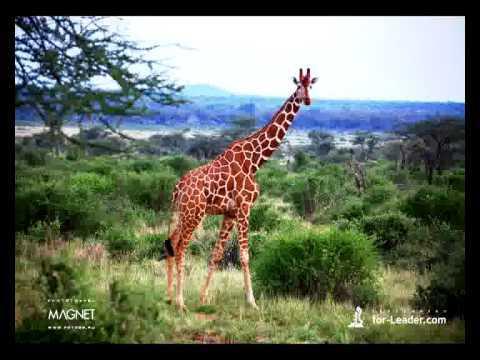 Путешествие Юнга по Африке