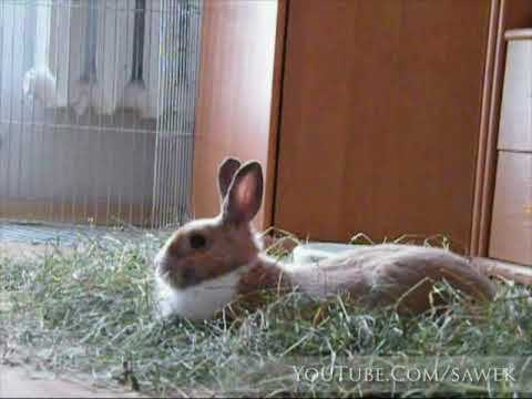 Rabbit, natural environment