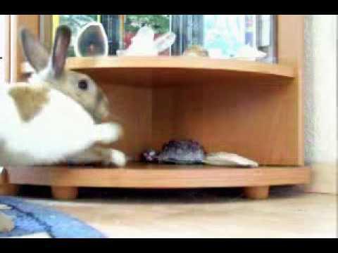 Rabbit play
