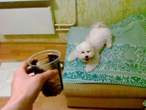 Прикол с собакой.mp4