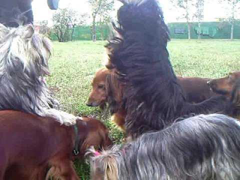 Смешные собачки питомник Ковалени