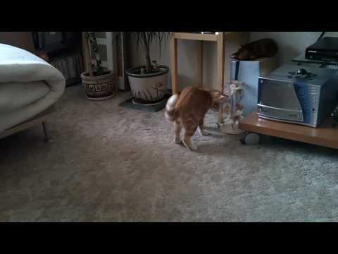Кот и воблер (Kitten & Wobbler)