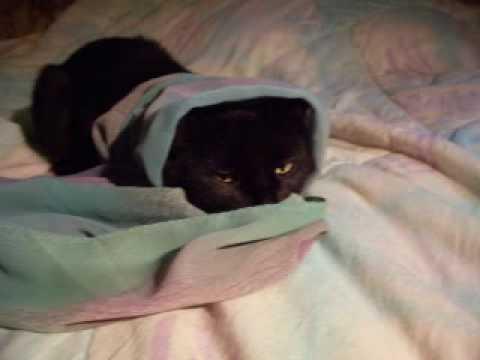 My funny cat Kitty - Моя забавная кошка Китти